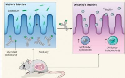 microbiome mere enfant