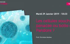 cellules souches